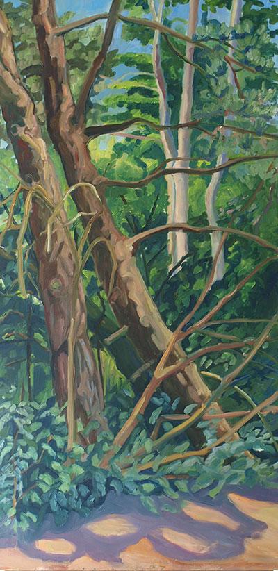 Bomen-in-het-Beatrixpark