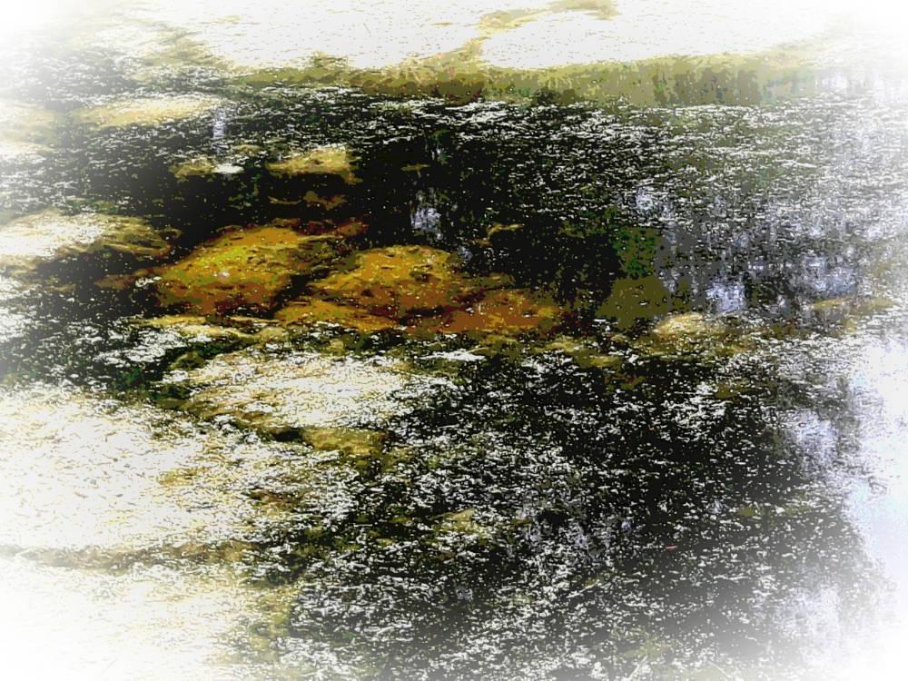 Foto, ' Algen 2'