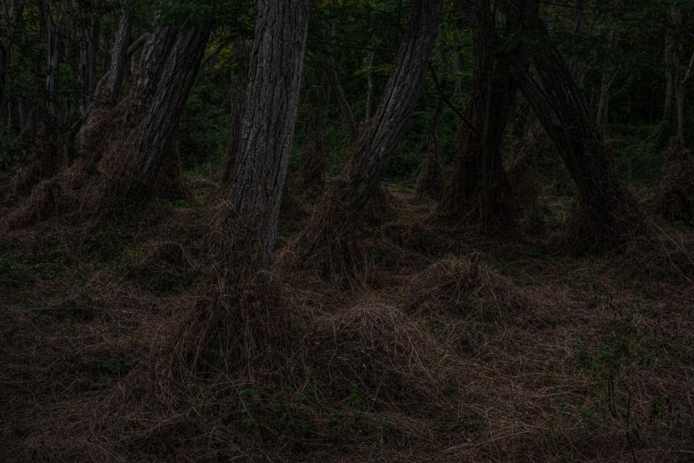 Forêt Sinistre #2 - foto